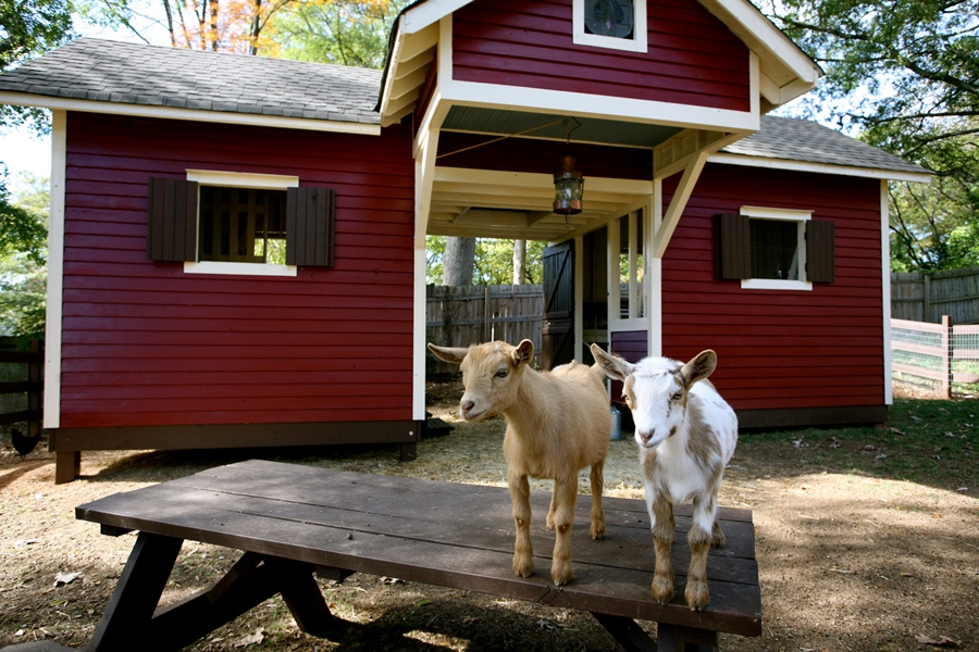 The Social Goat Bed and Breakfast in Georgia