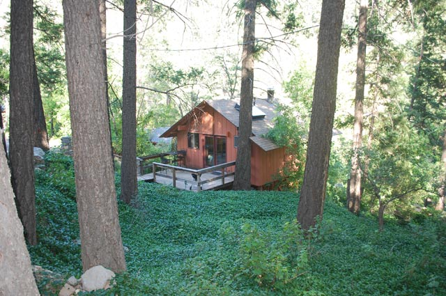 A Forest Resort Treehouse in Arizona
